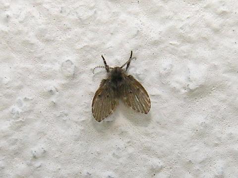 habita reproduccion mosca: